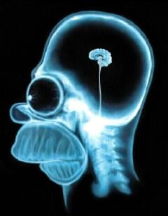 homer_brain_small_2