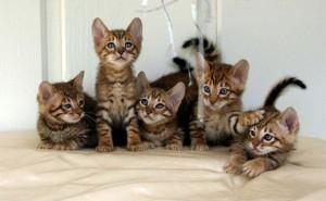 cat story أم حابس